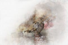 Kleine Spatz Aquarell-Digital-Malereiweinlese Stockbild