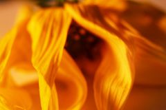 Kleine Spezies der Blume Stockfotos