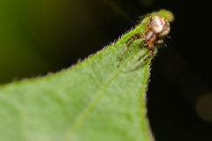 Kleine spin Stock Afbeelding