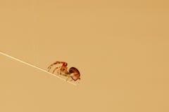 Kleine Spinne stockfotos