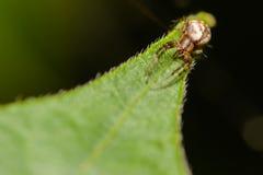 Kleine Spinne Stockbild