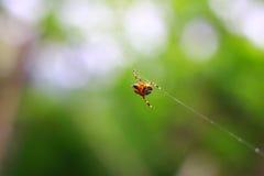 Kleine Spinne Lizenzfreie Stockfotos