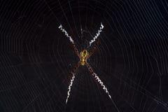 Kleine Spinne auf Netz mit dunklem Hintergrund Stockfoto
