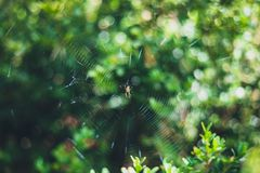 Kleine Spinne auf seinem Spinnennetz mit unscharfen grünen Blättern auf dem Hintergrund lizenzfreie stockfotografie