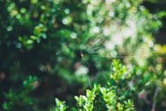 Kleine Spinne auf seinem Spinnennetz mit unscharfen grünen Blättern auf dem Hintergrund stockbilder