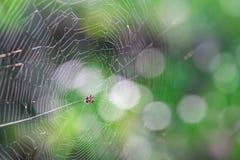 Kleine Spinne im Netz lizenzfreies stockfoto