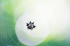 Kleine Spinne im Netz lizenzfreie stockfotos