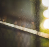 Kleine Spinne in seinem Web Lizenzfreies Stockfoto