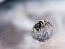 Kleine springende Spinne sieht Reflexion im Glas lizenzfreie stockbilder