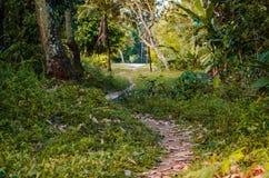 Kleine Spur des Schmutzes unter Bäumen und grüner Vegetation lizenzfreie stockbilder