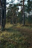 Kleine Spur im Wald stockfotos