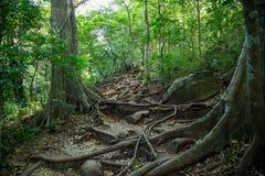 Kleine Spuren im grünen dichten Dschungel Lizenzfreie Stockbilder