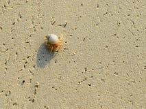 Kleine Stap - Uiterst kleine Schaaldier met Zeeschelp die over Sandy Beach lopen royalty-vrije stock foto's