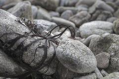 Kleine starke schwarze Algen schlossen auf einer Kieselküstenlinie im Tief an Lizenzfreie Stockbilder