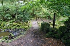 Kleine steenvoetgangersbrug in clough van het allegaartjegat in West-Yorkshire Stock Afbeelding