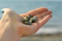 Kleine stenen in een hand Stock Fotografie