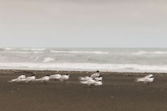Kleine sternen op strand Royalty-vrije Stock Foto's