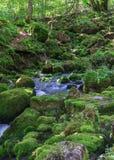 Kleine Ströme über moosigen Felsen im Wald Stockfotografie