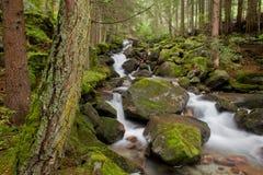 Kleine Stromflüsse in das Unterholz in den Alpen stockfoto