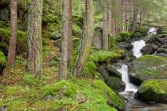 Kleine Stromflüsse in das Unterholz in den Alpen stockfotos