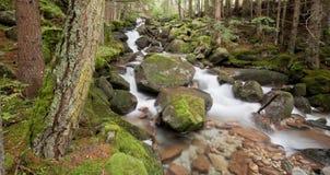 Kleine Stromflüsse in das Unterholz in den Alpen stockfotografie