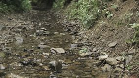Kleine stroom in bergen stock video