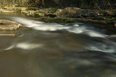 Kleine stroom in het bos Stock Foto's