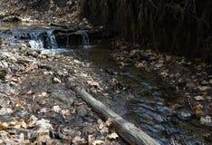 Kleine stroom in het bosgebied Wild landschap Royalty-vrije Stock Foto's