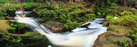 Kleine stroom in regenwoudpanorama stock foto's