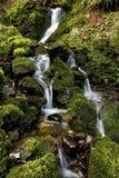 Kleine stroom van dalend water over mos en rotsen Royalty-vrije Stock Afbeelding