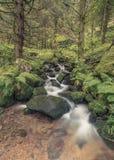Kleine stroom in zwart bos Stock Afbeelding