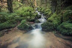 Kleine stroom in zwart bos Royalty-vrije Stock Fotografie