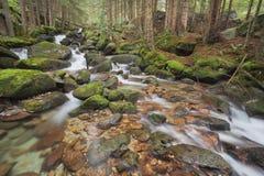 Kleine stroomstromen in het kreupelhout in de Alpen Stock Fotografie