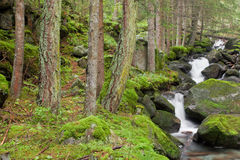 Kleine stroomstromen in het kreupelhout in de Alpen Stock Foto's