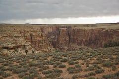 Kleine struiken die op woestijn zoals landschap voor grote canion groeien stock fotografie