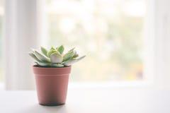 Kleine succulente installatiepot op vensterbank Stock Foto's
