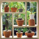 Kleine succulente potteninstallaties decoratief op houten venster met ochtend warm licht royalty-vrije stock afbeeldingen