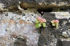 Kleine Succulents in der Blüte Stockbild