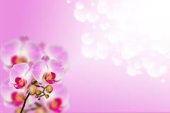 Kleine tak van zachte orchideeën op gradiënt bokeh Royalty-vrije Stock Afbeeldingen