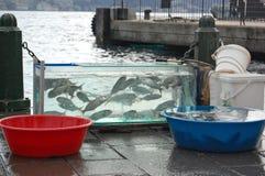 Kleine tanks met vissen Stock Foto