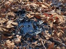 Kleine Teergrube umgeben durch Blätter, Zweige und Schmutzaußenseite stockfotos