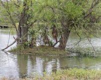 Kleine Teich-Insel Lizenzfreies Stockbild