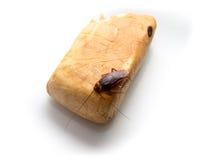 Kleine Tiere der Schaben lenken ärgerliche Krankheitsursachen ab Lizenzfreies Stockbild