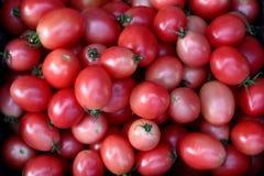 Kleine tomaat vers op Thaise markten royalty-vrije stock afbeelding