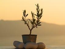 Kleine Topfpflanze mit Felsen Lizenzfreie Stockbilder