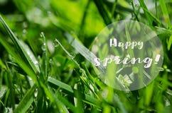 Kleine Tropfen des Taus auf frischem grünem Gras morgens lizenzfreies stockfoto