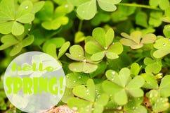 Kleine Tropfen des Taus auf frischem grünem Gras morgens lizenzfreie stockbilder