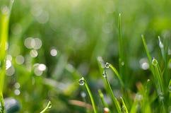 Kleine Tropfen des Taus auf frischem grünem Gras morgens stockbild