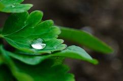 Kleine Tropfen des Taus auf frischem grünem Gras morgens lizenzfreies stockbild