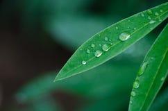 Kleine Tropfen des Taus auf frischem grünem Gras morgens stockfotos